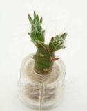 Брелок-растение